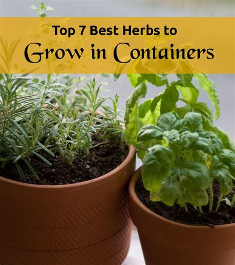 growing herbs top 7 best herbs to grow in containers gardening