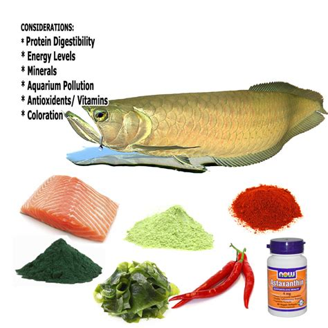 Vitamin Vibrion Aquarium Fish Nutrition Fish Food Information Aquatic