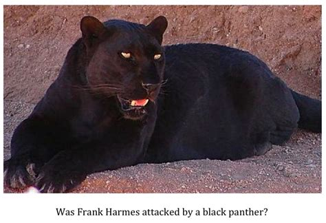 what color is a panther cryptid alabama attacked by a black
