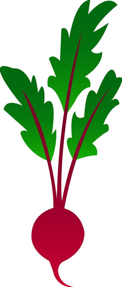 beet clipart garden beet free clip