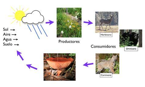cadenas troficas productores construyendo una cadena alimentaria cserc didactalia