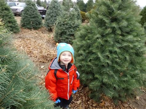 u cut christmas tree farms near chicago