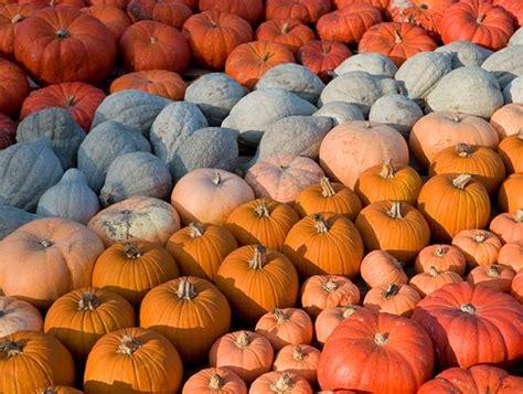 the great pumpkin hunt seedlings classes denver botanic