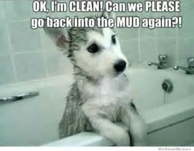 Cleaning Baby Bathtub Puppy Logic Weknowmemes
