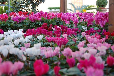 fiori per vasi da esterno fiori da esterno giardinaggio fiori da esterno