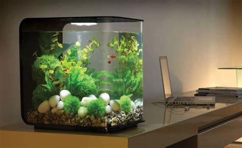 acquario per casa sinta se como um peixe na 193 gua um aqu 225 em casa
