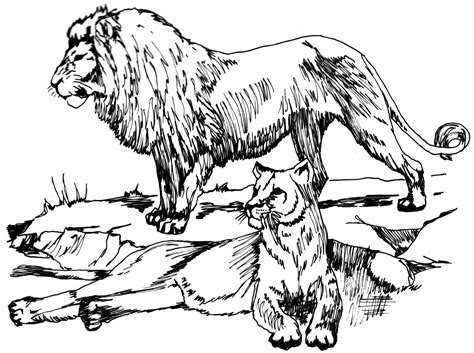 african cats coloring pages big cat line drawings