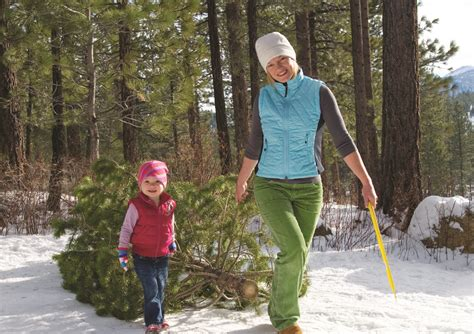 nh magazine best cut your own christmas tree best 28 cutting your own tree cutting your own tree in the
