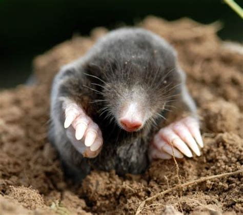 october 23 is national mole day baby boomer going like sixty