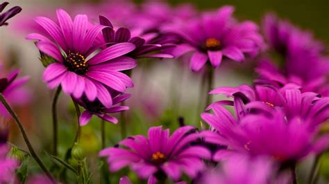 win with flower world s top 100 beautiful flowers images wallpaper photos