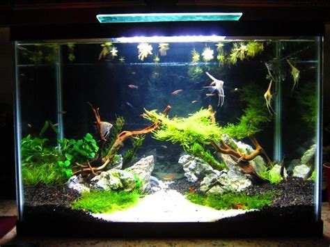 aquascaping ideas for planted tank 66 best images about tank inspiration on pinterest