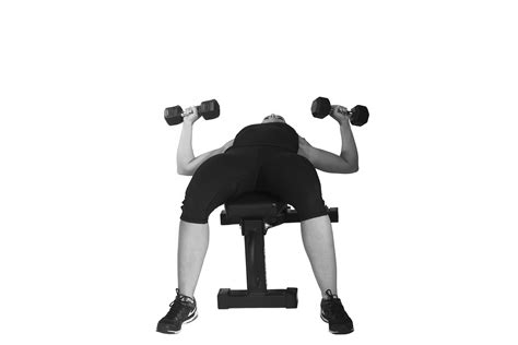 flat bench dumbbell chest press upper body exercises to do with dumbbells reader s digest