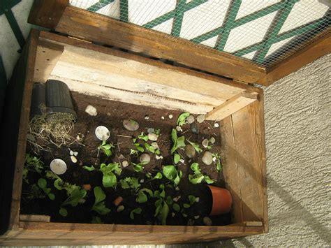 casa per tartarughe 50 idee di come costruire una casa per tartarughe image