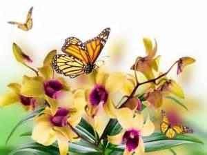 imagenes de mariposas blancas volando fondos de mariposas im 225 genes mariposas p 225 gina 17