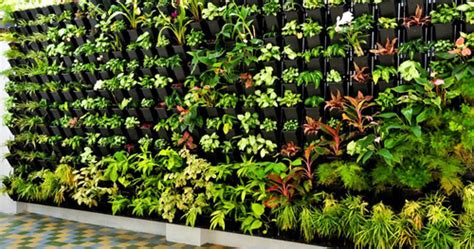 gardening solutions vertical garden service provider
