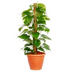 Plants to improve indoor air quality