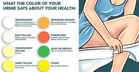 what does the color of your what does the color of your urine say about your health