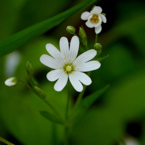 flowers photo tiny white flowers in bloom light pretty white flower mairi s gallery gallery lumix g
