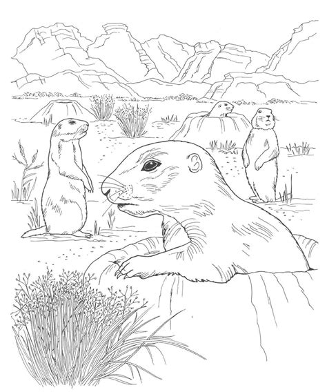 printable desert animal coloring pages desert coloring page coloring home