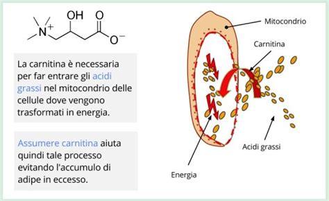 carnitina alimenti la carnitina cos 232 a cosa serve come funziona
