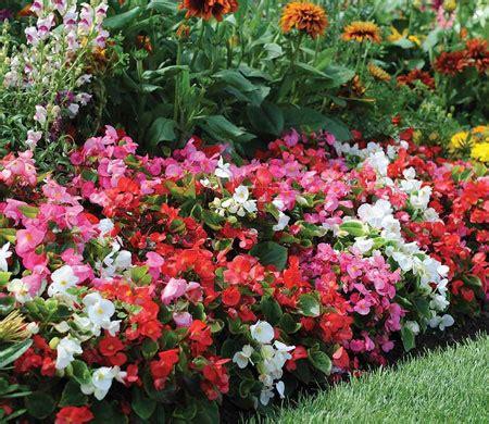 Garten Pflanzen Juli by In The Garden This Month And Gardening Ideas Thompson