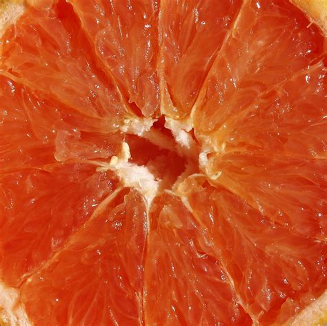 free detailed macro images and stock photos freeimages free fruit macro stock photo freeimages