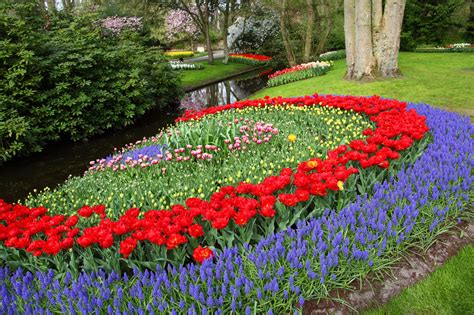 flower gardens in keukenhof gardens free stock photo domain pictures