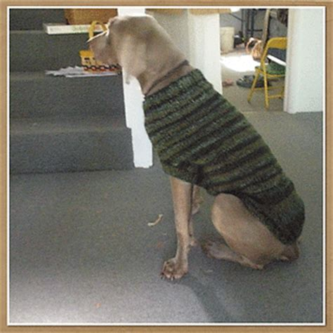 pattern for boxer dog coat ravelry the ozzie large dog sweater pattern by jenna greer
