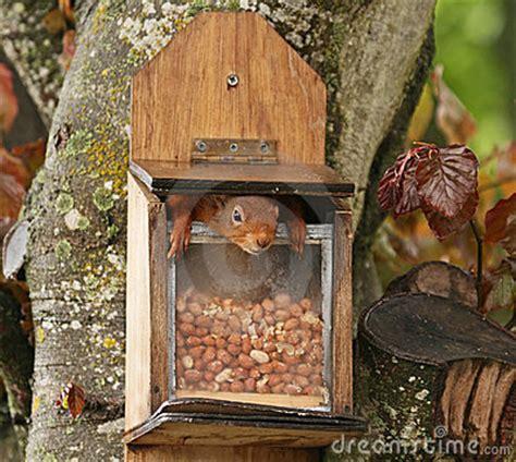 homemade squirrel feeder plans homemade ftempo
