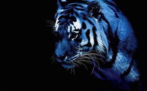 Blue Tiger blue tiger background