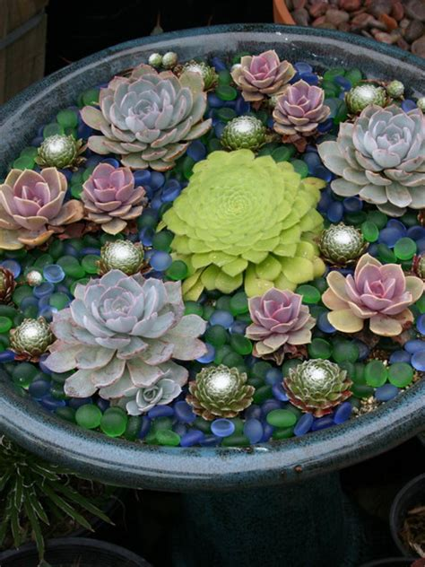 Bohohoney Succulent Plants Succulent Planter Ideas