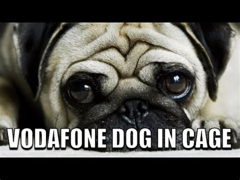 vodafone pug vodafone in a cage this pug