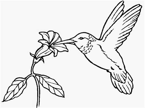 coloring pages birds printable hummingbird coloring pages