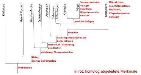 Wie Tötet Einen Baum by Abiunity Wirbeltierstammbaum Gleichzeitig Auch Dendrogramm