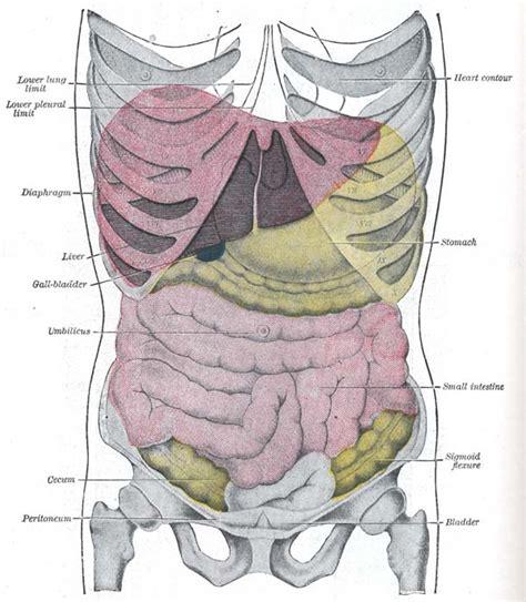 herzrhythmusstörungen beim liegen auf der linken seite stechen im darmbereich cyberdoktor patientenberatung