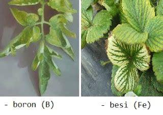 unsur hara mikro tanaman hidroponik
