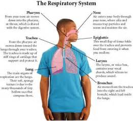 Respiratory Description by Pearson Science Activity