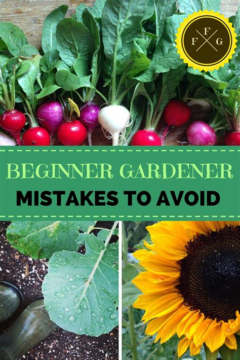 beginner gardener mistakes to avoid backyard gardening