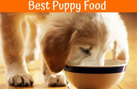 best puppy food the best puppy food reviews of healthy food for puppies in 2017 us bones