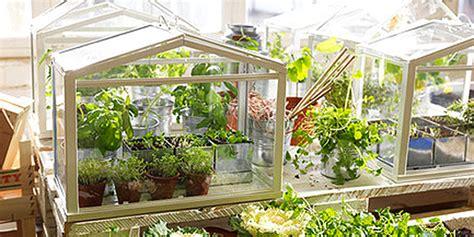 une mini serre pour jardiner  linterieur nouvelle vie