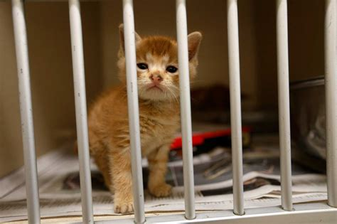 houston pound more means more pets for county s animal shelter houston chronicle