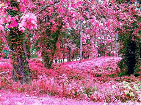 Picture Of Flower Garden Pink Flower Garden Wallpapers Http Refreshrose