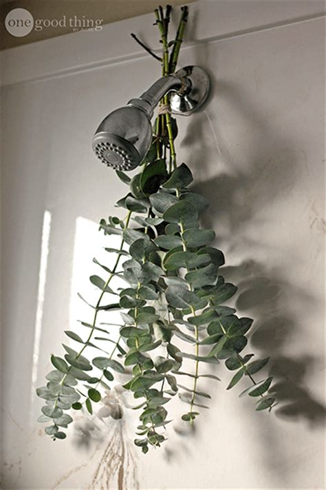 how to take an aromatic eucalyptus shower one thing