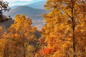 fall colors in fall foliage 2016 forecast and guide blue ridge mountain