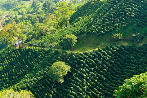 places  visit  colombias coffee region kimkim