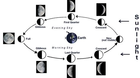 phases of moon diagram looking at the moon from earth diagram pics about space