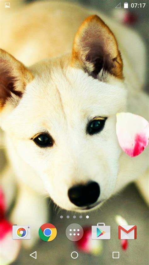 dog wallpapers pictures cute dogs on the app store cute dogs android apps on google play