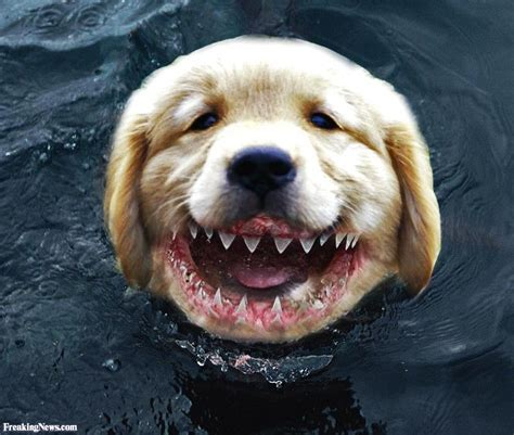 puppy teeth shark teeth pictures freaking news