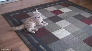 Cat Stares At Ceiling by Of A Kitten Turning The Lights On By Leaping Into