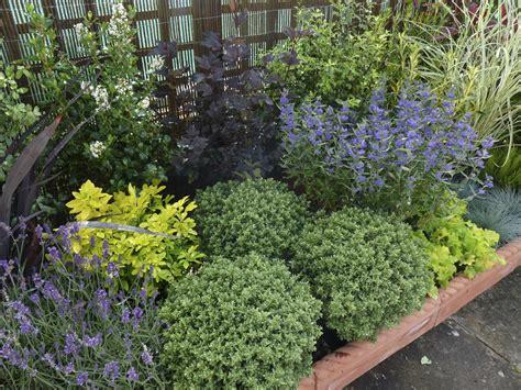 low maintenance landscaping shrubs garden pinterest
